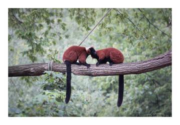 Cute Animal Love by MomoOChaN