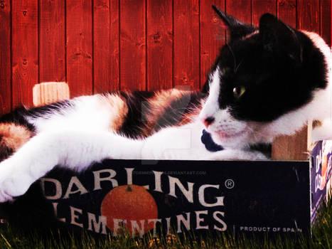 Darling Sora