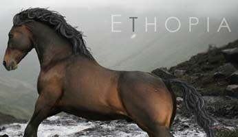 Realistic wild equine role play looking for new friendly members.