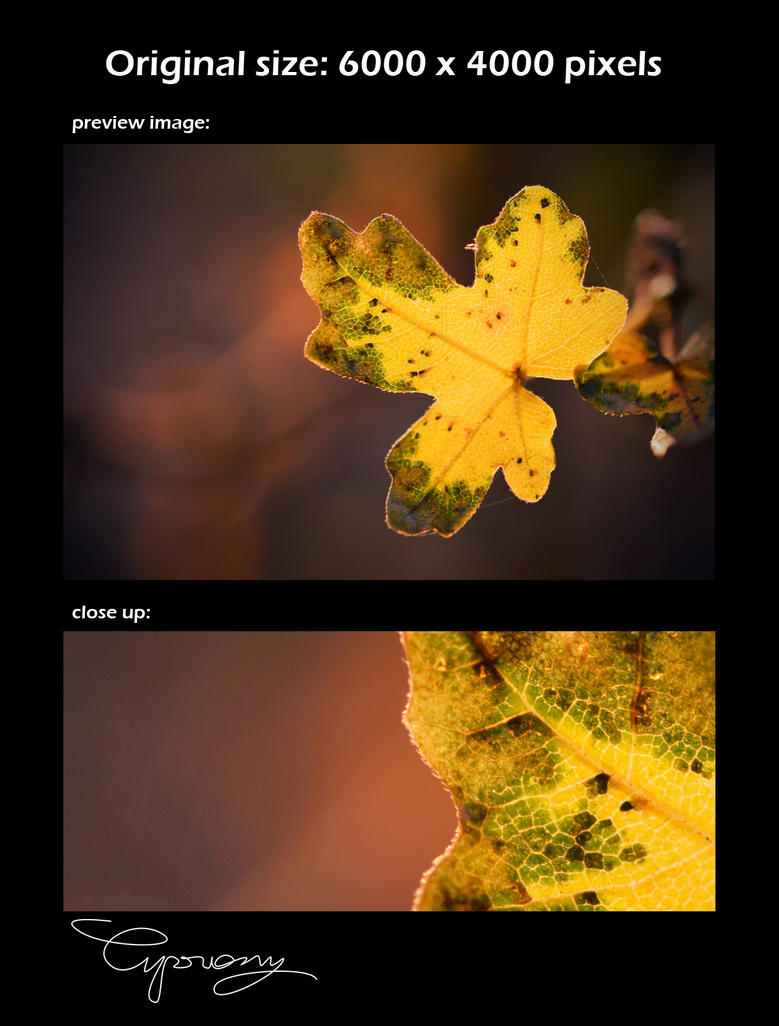 Leaf by cipriany