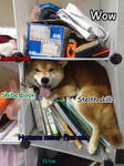 Another Silly Shibe