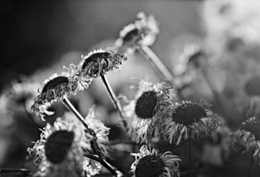 some flowers in sunlight