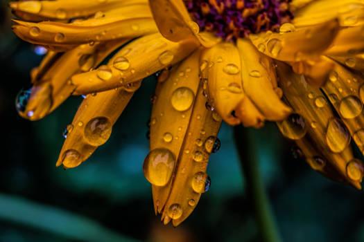 After the Rain - II