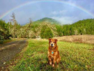 nieman 2019 Oregon Rainbows