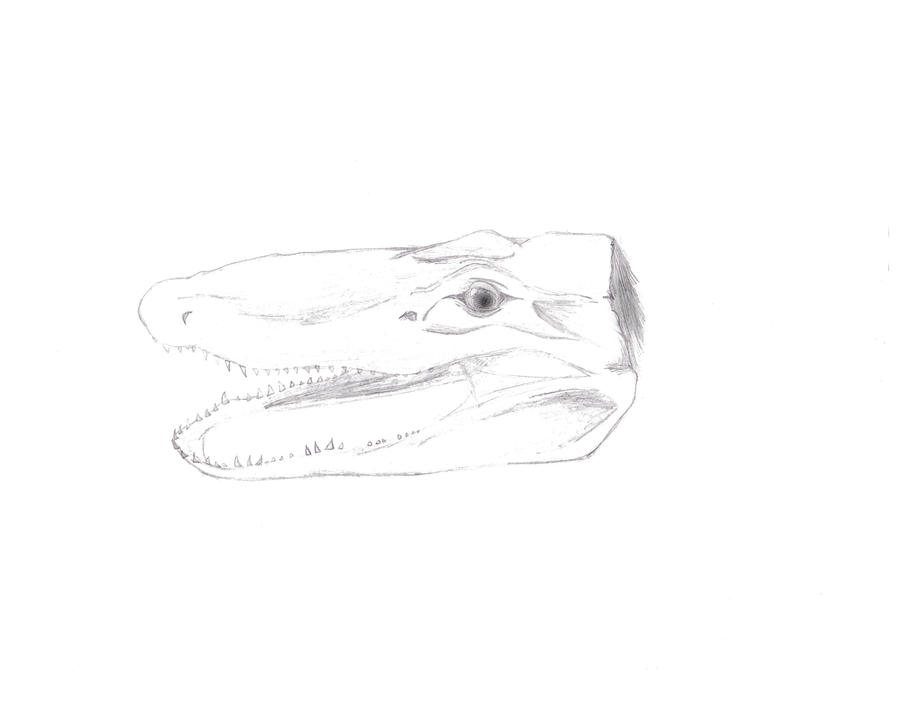Alligator Skull by iSmileyfacefan on DeviantArt