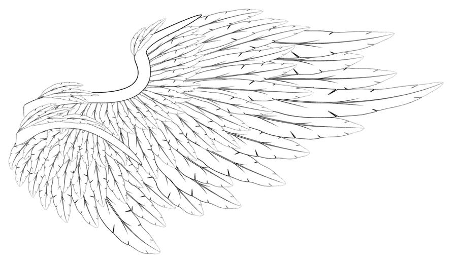Line Art Angel : Angel wing study lineart by aciampal on deviantart