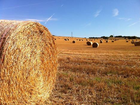 Harvest Fields 02