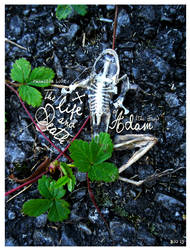 Paradise Lost -The Life/Death of Adam (the Frog) by misfitmalice