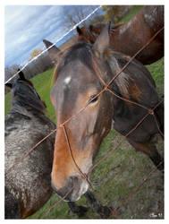 Do horses dream of jailbreak? by misfitmalice
