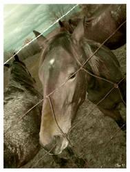 Do horses dream of jailbreak 2? by misfitmalice