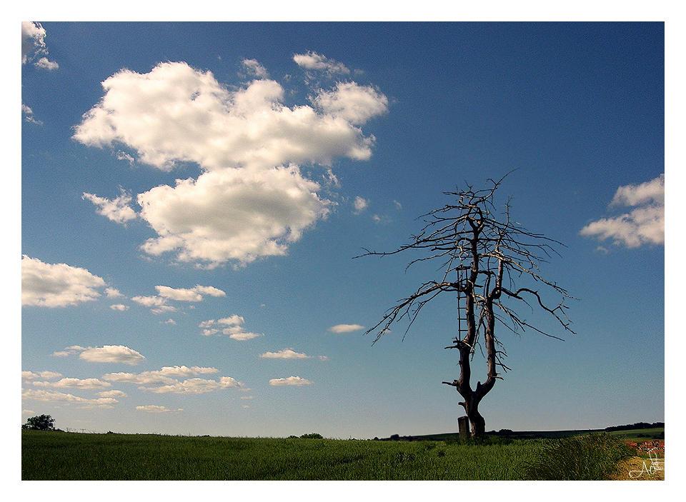 Landscape by LLr0cks