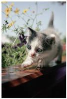 Kitten by LLr0cks