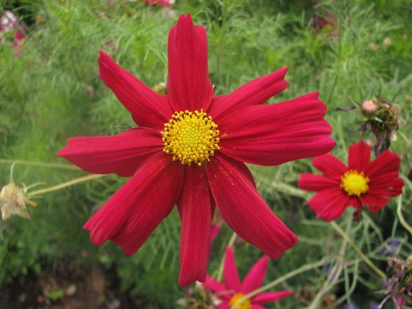 Fleur du jardin des plantes by clicker fou on deviantart for Art du jardin zbinden sa