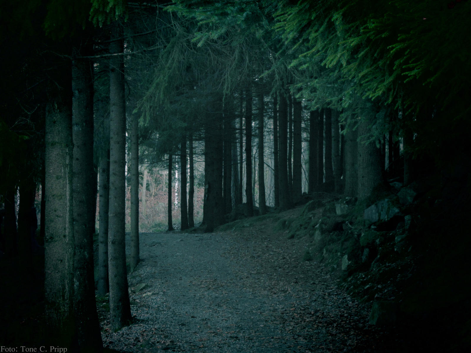 the dark forest by ton...