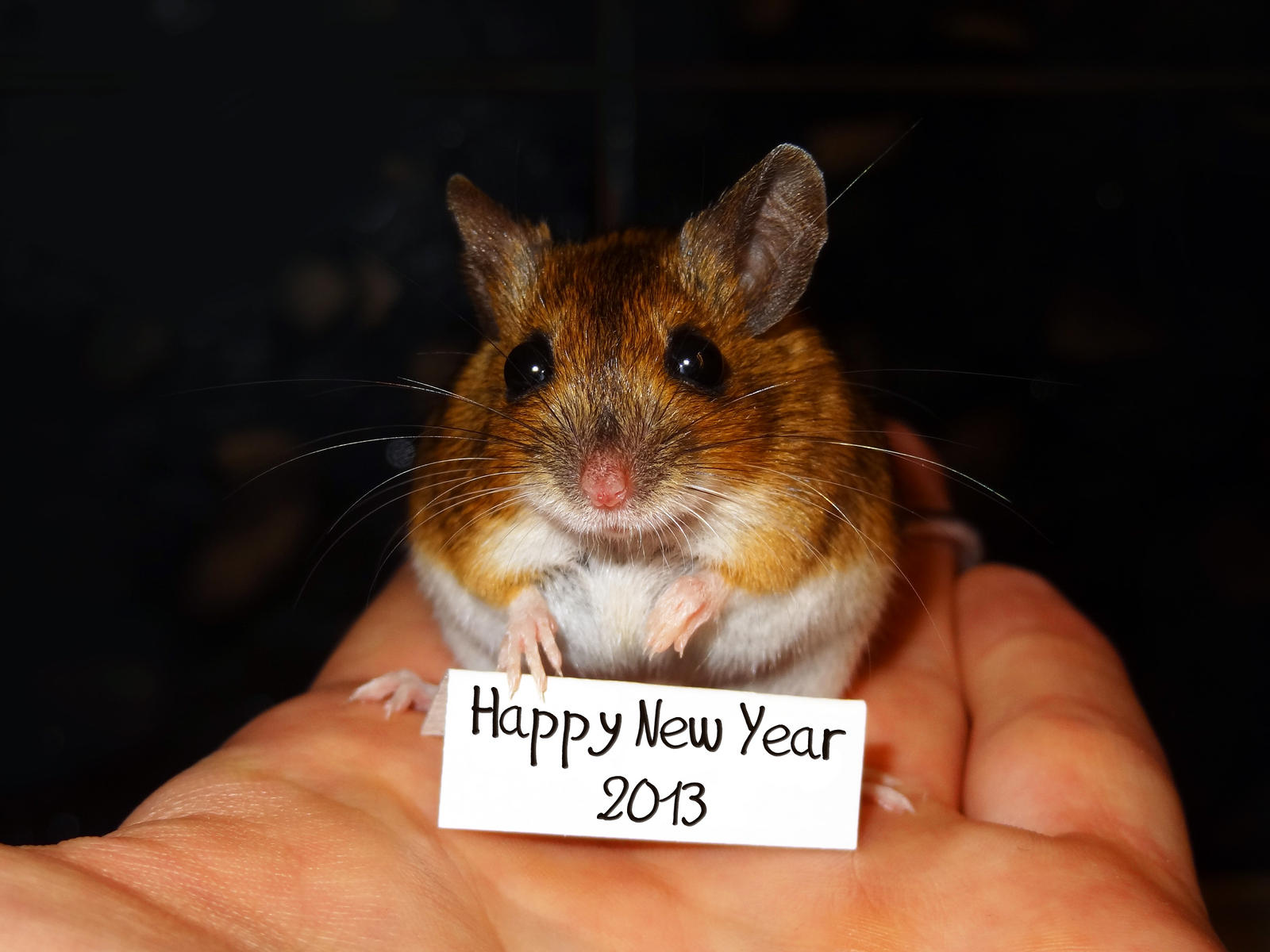 Happy New Year 2013 by eco6org