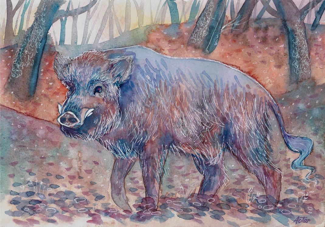 Wild boar by Aotar