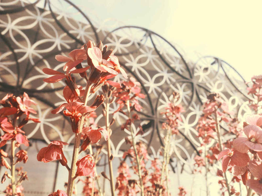 Flowers outside Library of Birmingham by XxFreakOfNaturexX