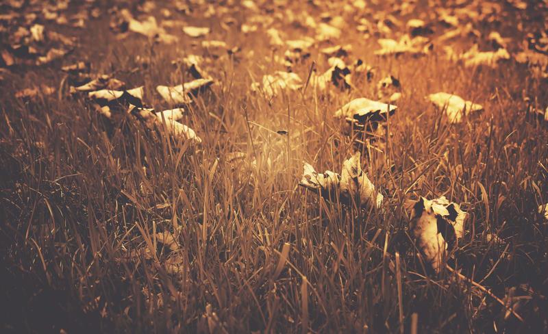 To Autumn... by XxFreakOfNaturexX