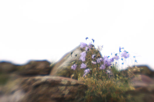 Bluebells lensbaby