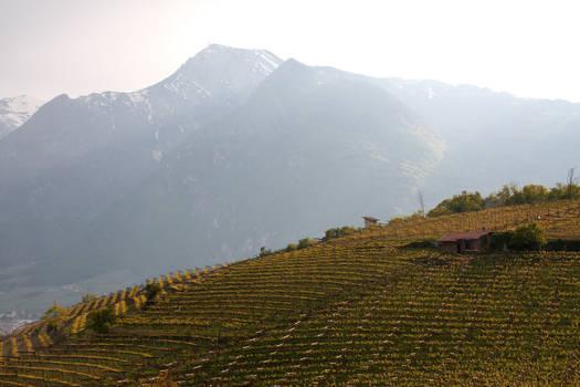 Hills of Trento