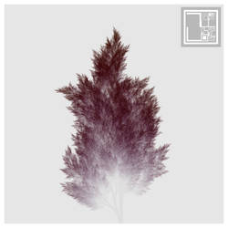 foggy trees - variation FOG