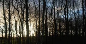Treelight - The Last Day of Autumn