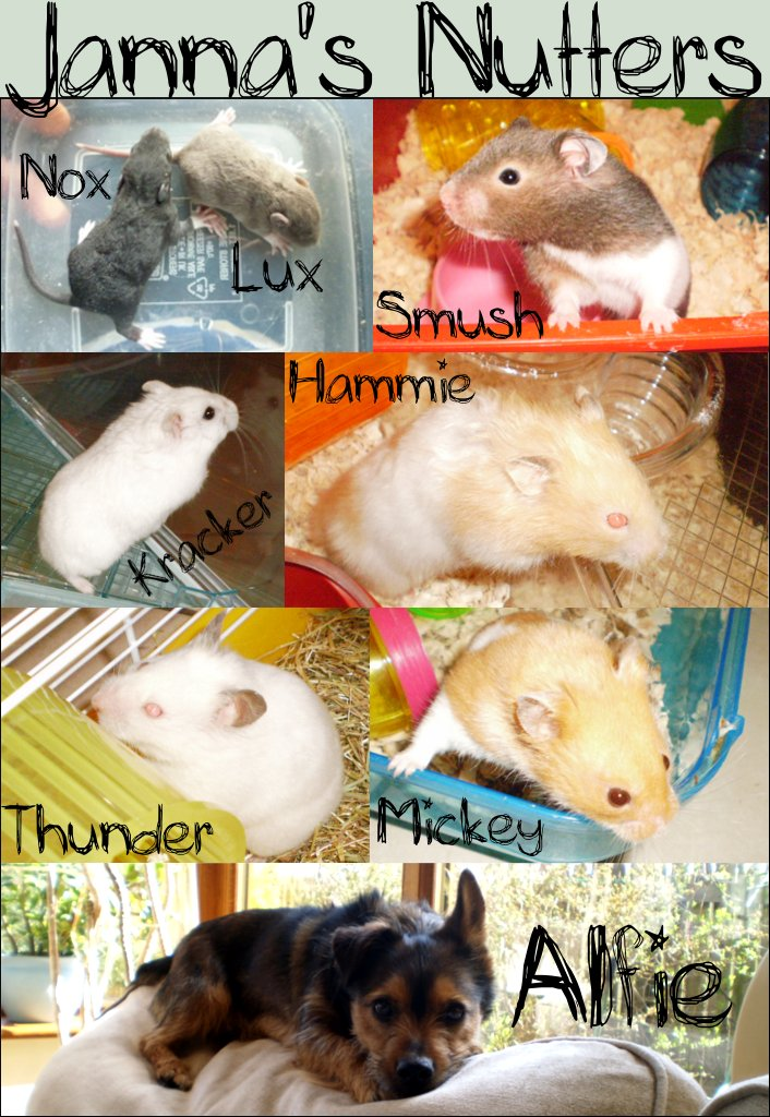 My Pets. by Sk8rWolf