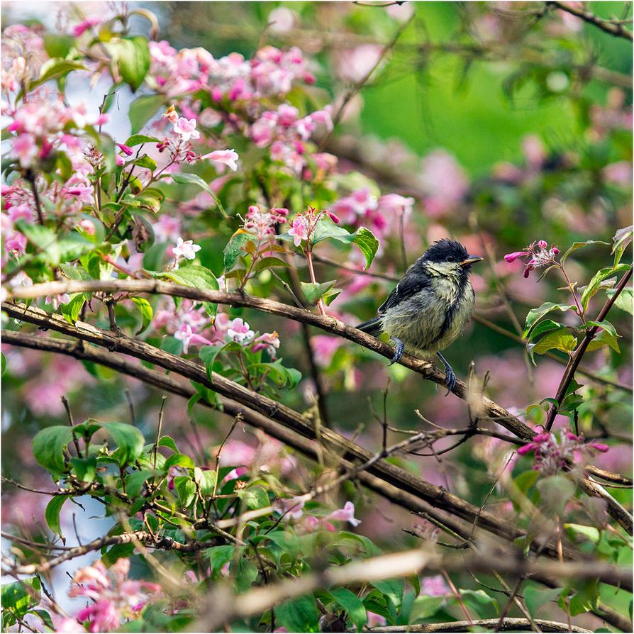 Songbird II by LovLus