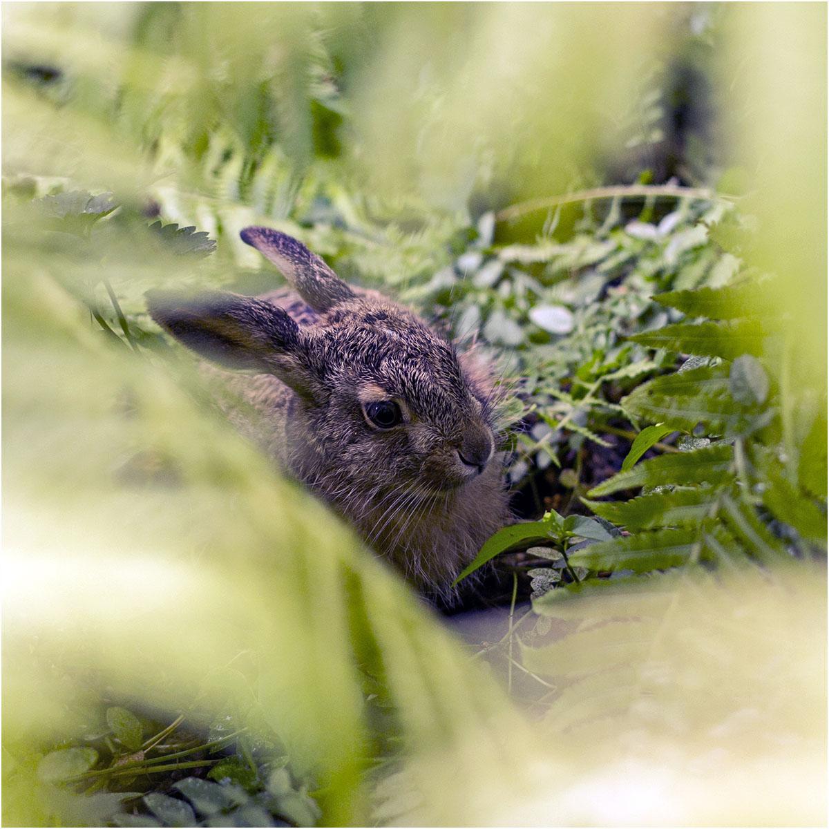 Baby Hare II by LovLus
