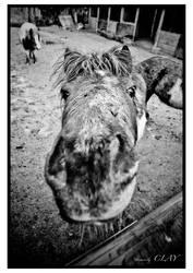 Pony Portrait 4441