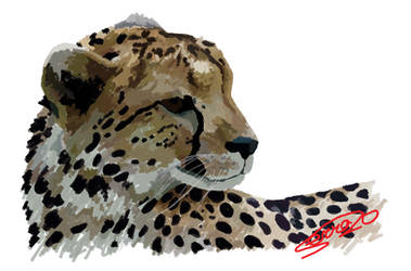 Cheetah study