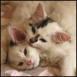 kittenART