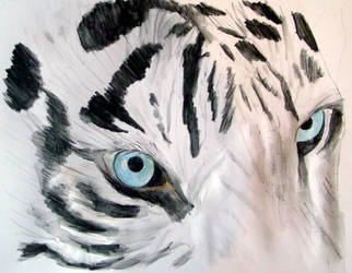 Eye Of The Tiger by DundalkChild