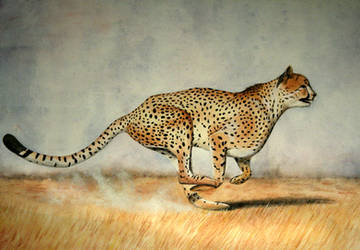 The Hunt by DundalkChild