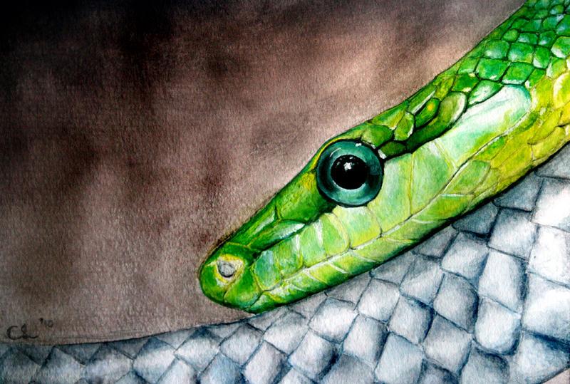 Serpentine by DundalkChild