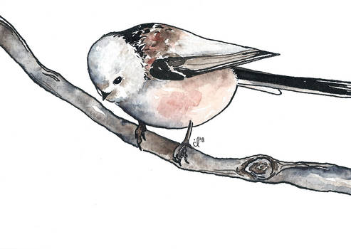 100 Birds: #9 Long Tailed Tit