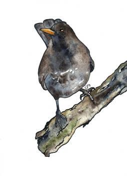 100 Birds: #10 Blackbird
