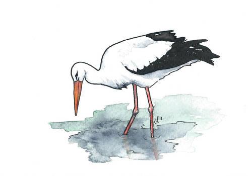 100 Birds: #12 White Stork