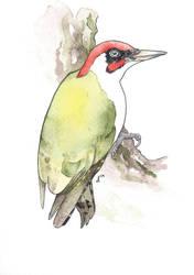 100 Birds: #17 European Green Woodpecker