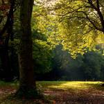Seeking the Successive Autumns by DpressedSoul