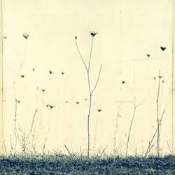 Fragile Dreams by DpressedSoul