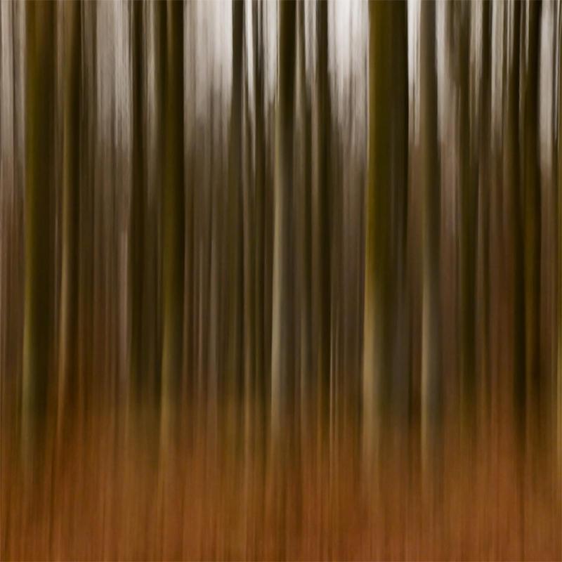 Forest Impression by DpressedSoul