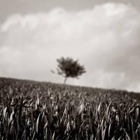 Fields of Sorrow by DpressedSoul