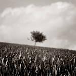 Fields of Sorrow