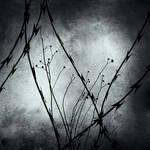 Forgotten Hopes