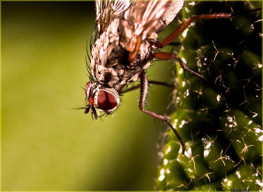 Im a fly by sKodOne