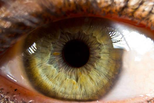 Eye Series III