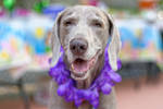 Dog at Kids Party by Charlief43