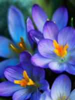 Bloomings by Kamal-Q
