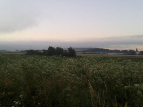 mist over the fields